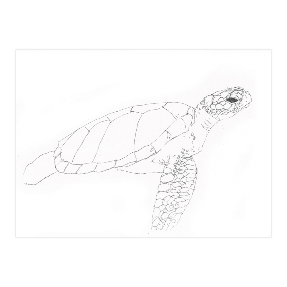 Just Lines w/ Reference Sea Turtle 2