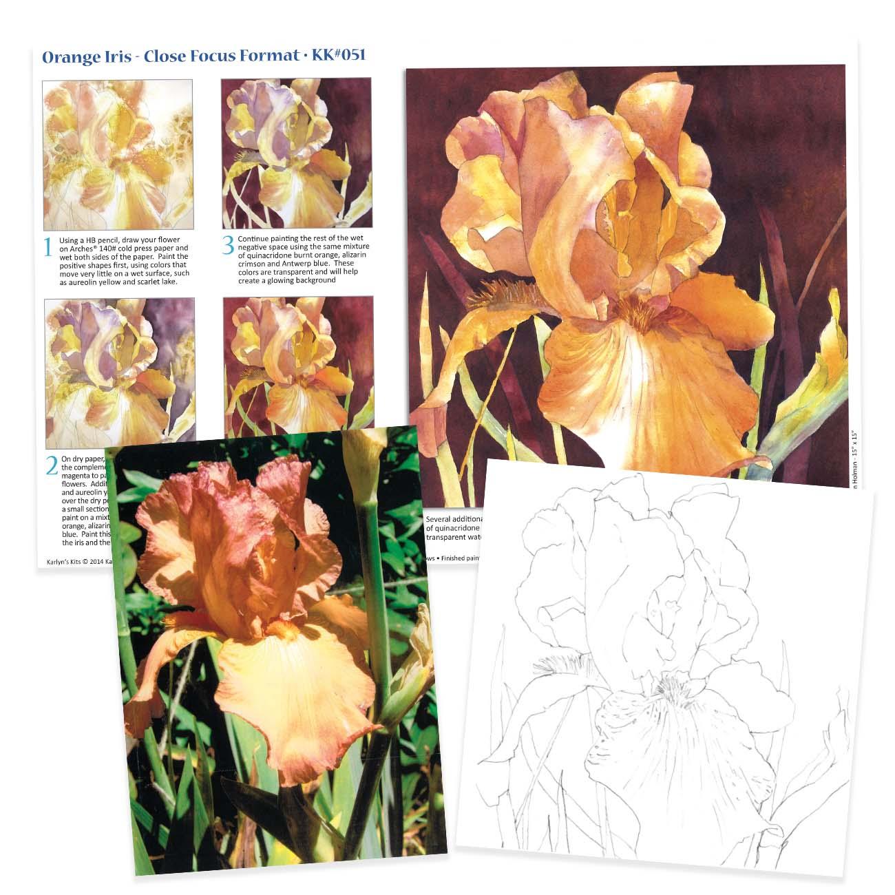 KK051 Orange Iris - Close Focus